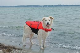 Спасательный жилет для собак - Trixie Life Vest for dogs, XL 65 cm, цвет - красный/черный