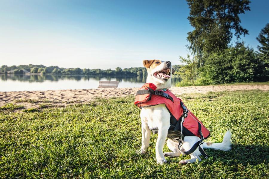 Спасательный жилет для собак - Trixie Life Vest for dogs, 54 cм, красный/черный