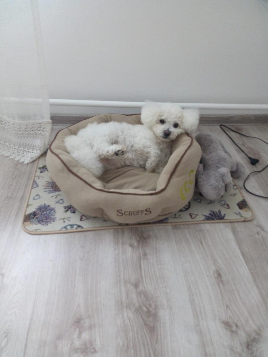 Guļvieta suņiem - Scruffs ECO Donut Bed (M), 55cm, natural