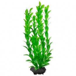 Декоративное растение для аквариума - Tetra Hygrophila M, 23 cм