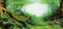 Фон для аквариума - Trixie задний фон для аквариума / Двухсторонний 60 x 30 cm