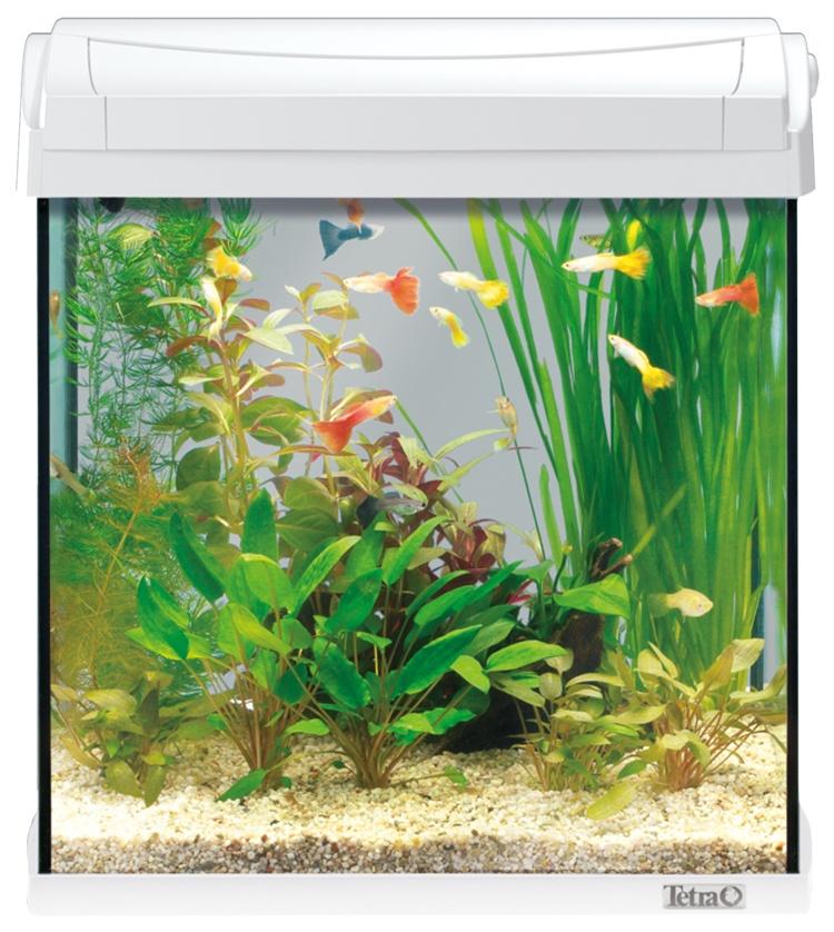 Akvārijs - TETRA Aqua Art LED 30l, white