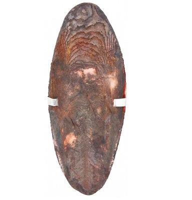 Сепия для птиц - TRIXIE Cuttle Fish Bones (assorted), 12 см