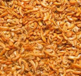 Barība zivīm - Gammarus, 500 ml