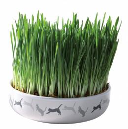 Керамическая миска с травой для кошек - Trixie, 50 g