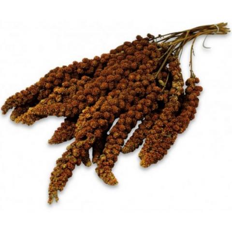 Лакомство для птиц - JR Farm Birds Spray Millet red/красное просо, 250 г