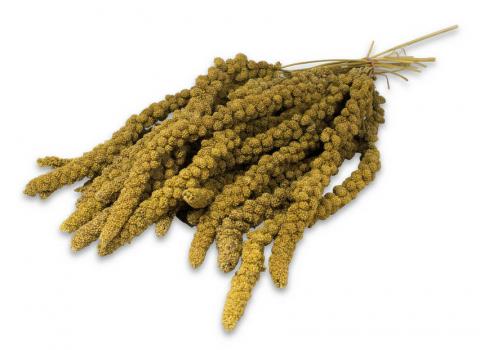 Gardums putniem - JR FARM Birds Spray Millet yellow, 500 g
