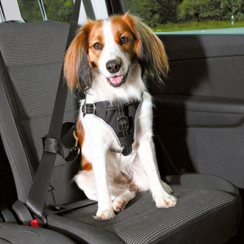 Automašīnas krūšu siksna - TRIXIE Dog Comfort Car Harness, Black, M: 50–65 cm title=