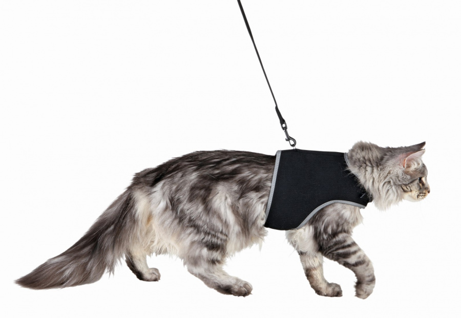 Шлейка - жилет с поводком для кошек - Trixie, размер XL