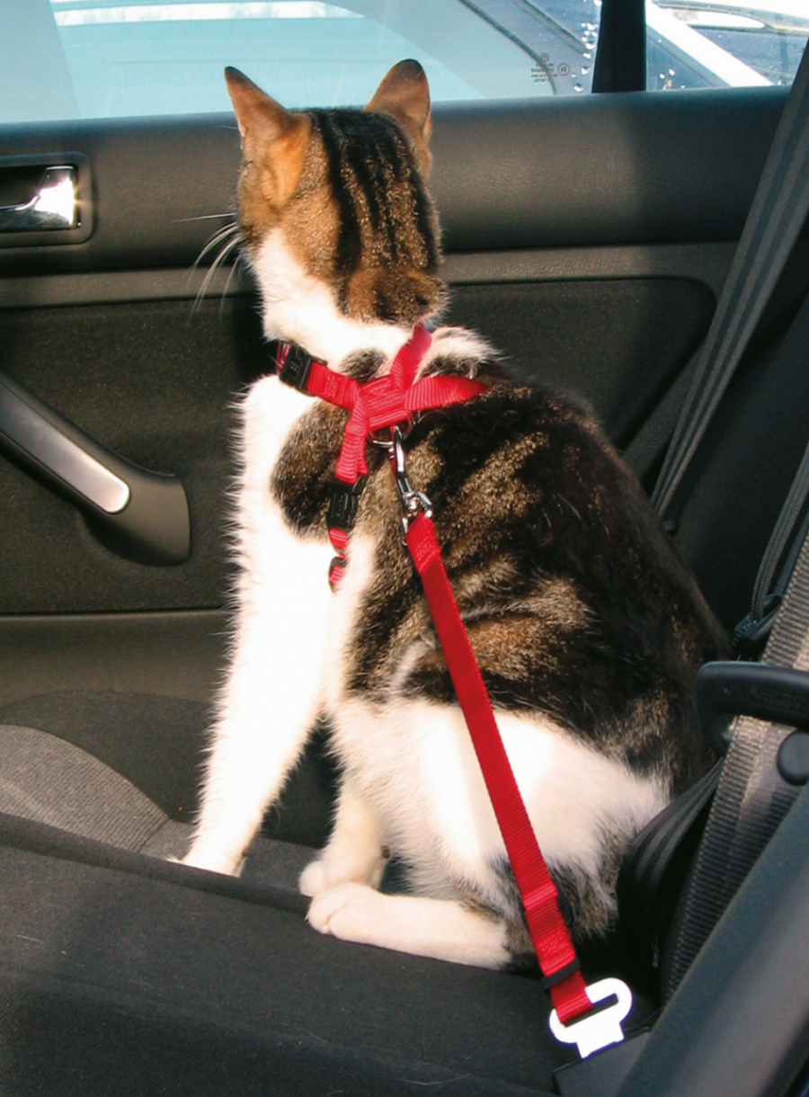Krūšu siksna kaķiem - Trixie Car harness for cats, 20–50 cm/15 mm, red