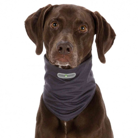 Платок для собак - Insect Shield® Dog Loop, XL, grey title=