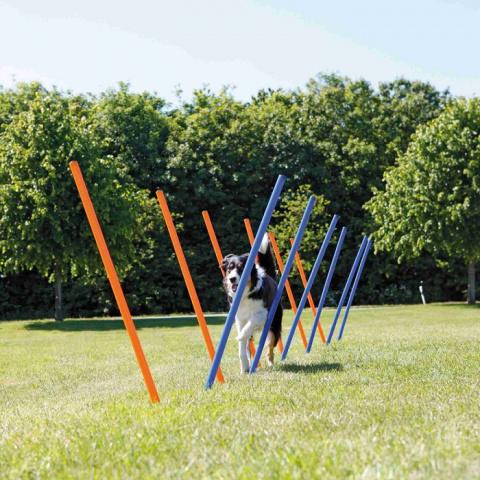 Adžiliti šķēršļi suņiem – TRIXIE Dog Activity Agility Slalom, 12 gab., Blue/Orange title=