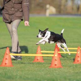 Adžiliti šķēršļi suņiem – TRIXIE Dog Activity Obstacles, 3 gab., Orange/Yellow