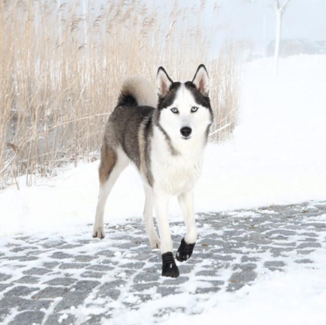 Apavi suņiem - Trixie, Walker Active Protective Boots, L, 2 gab.