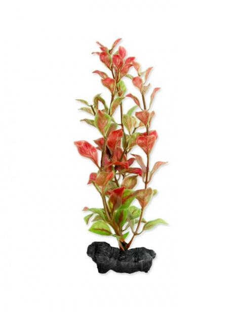 Декоративное растение для аквариума – Red Ludwigia S title=