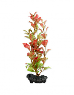 Декоративное растение для аквариума – Red Ludwigia S