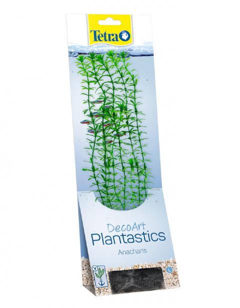 Декоративное растение для аквариума – Tetra Anacharis L title=