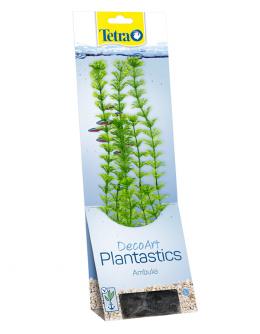 Dekoratīvs augs akvārijam – Tetra Ambulia L