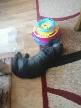 Rotaļlieta kaķiem - Trixie, Cat circle tower, plastic, augstums - 25 cm