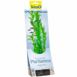 Декоративное растение для аквариума -  Tetra Hygrophila L, 30 cм
