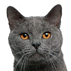 Výprodej potřeb pro kočky