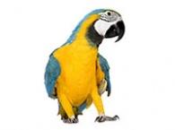 Klece a voliéry pro velké papoušky