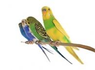 Klece a voliéry pro malé papoušky