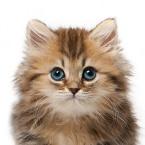 Granule pro koťata