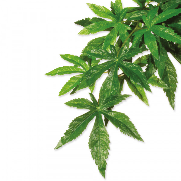Rostlina exo terra abuliton malá 40 cm