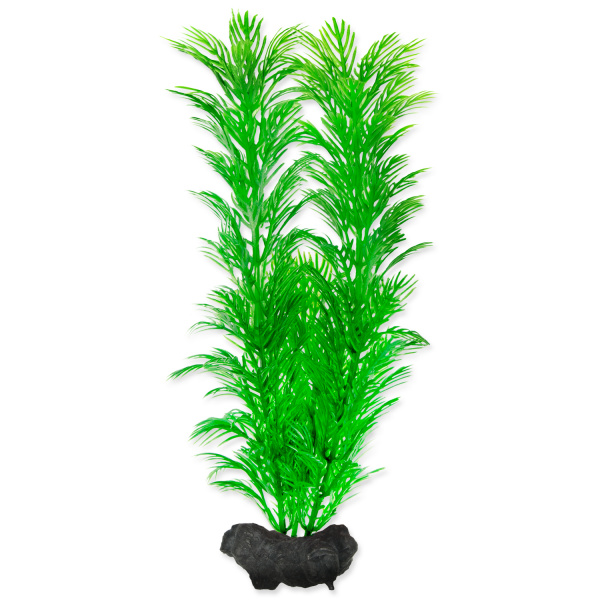 E-shop Rostlina Tetra Green Cabomba M 23cm