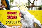 Předali jsme sbírku papouškům do společnosti Laguna