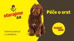 Péče o srst psa   Podcast Super zoo title=