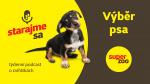 Výběr psa | Podcast Super zoo title=