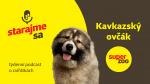 Kavkazský ovčák | Podcast Super zoo title=