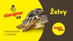Želvy | Podcast Super zoo title=