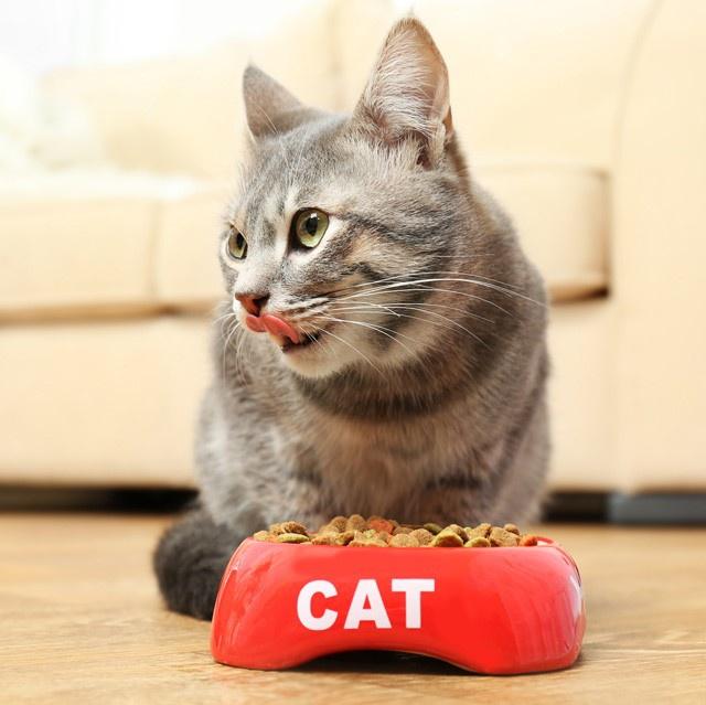 Čo treba vedieť o kŕmení mačiek?