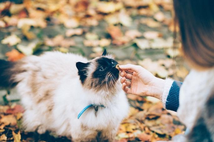 Jak správně krmit kočku