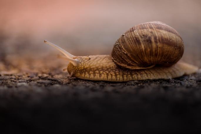 Jautājums Ihtiologam: Kā vairojās gliemeži?