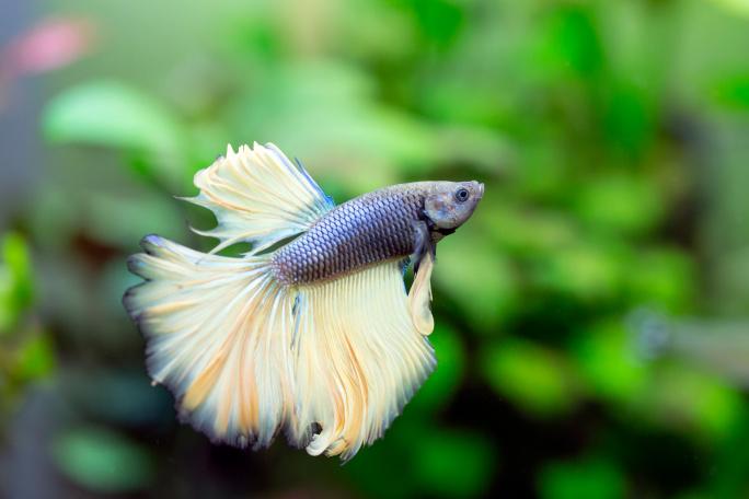 Nejoblíbenější druhy akvarijních ryb