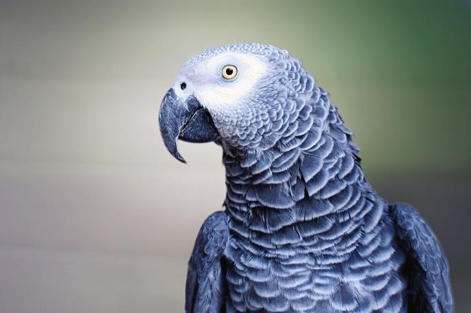 Péče o papouška