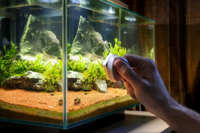 Péče o akvárium