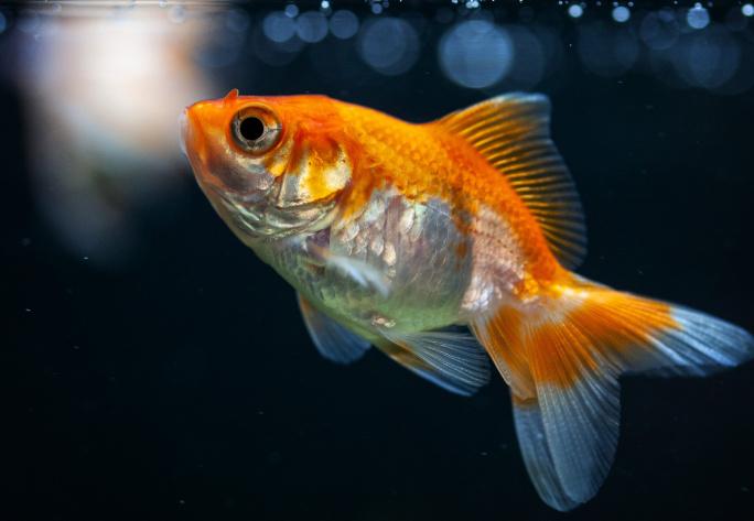 Nejčastější onemocnění akvarijních ryb