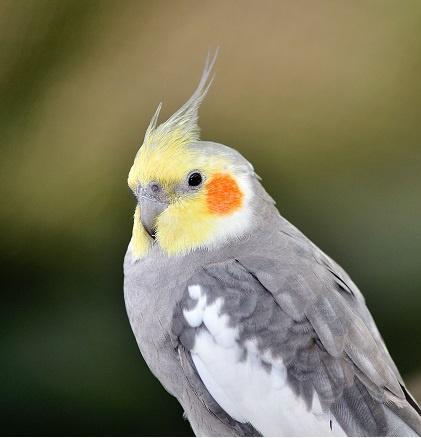 Nejoblíbenější druhy papoušků a exotů