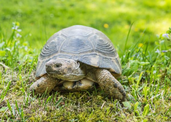 Zařizujeme venkovní výběh pro suchozemskou želvu  title=