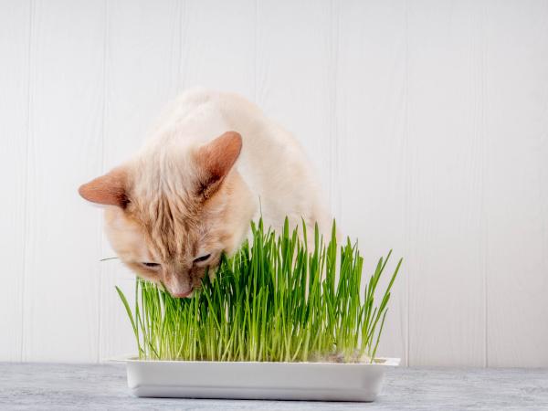 Co nesmí jíst kočka? title=