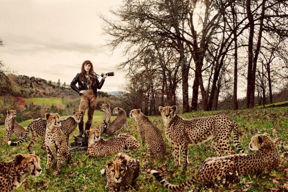 Jak fotí kočky Carli Davidson