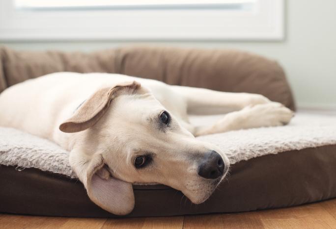 Co způsobuje zvracení u psů