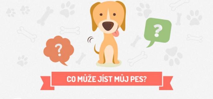 Co může jíst pes - Infografika
