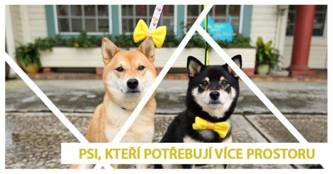 Žlutá stužka pro psy