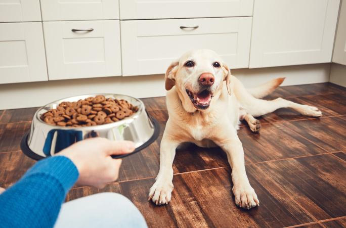 Kolikrát denně krmit psa